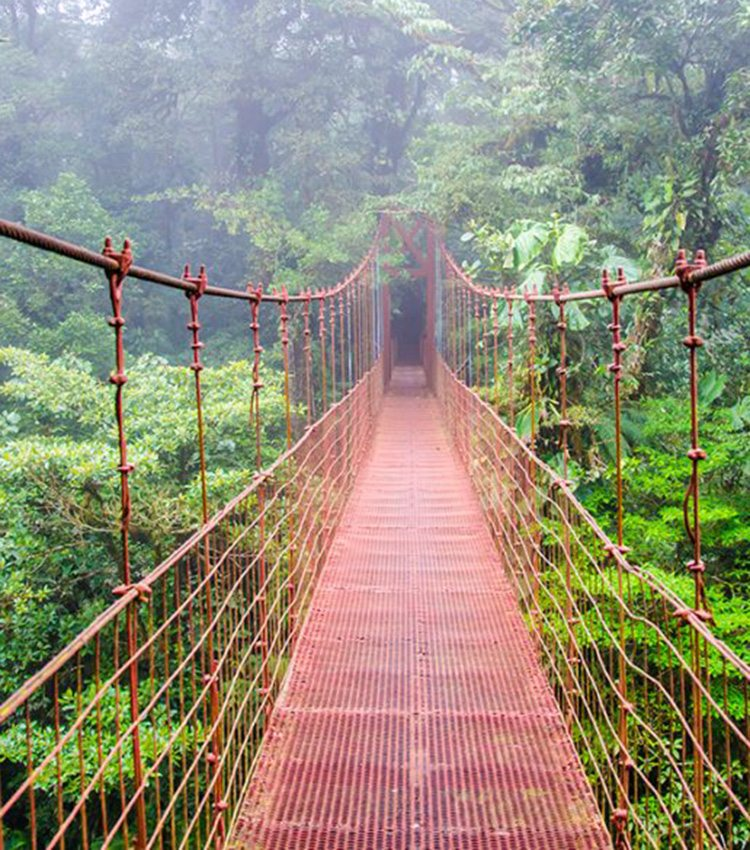 MONTEVERDE CLOUD FOREST FULL DAY TOUR
